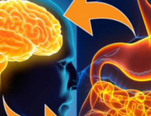 Dinsdag 20 juni | Webinar 'The Gut-Brain axis in de complementaire praktijk'